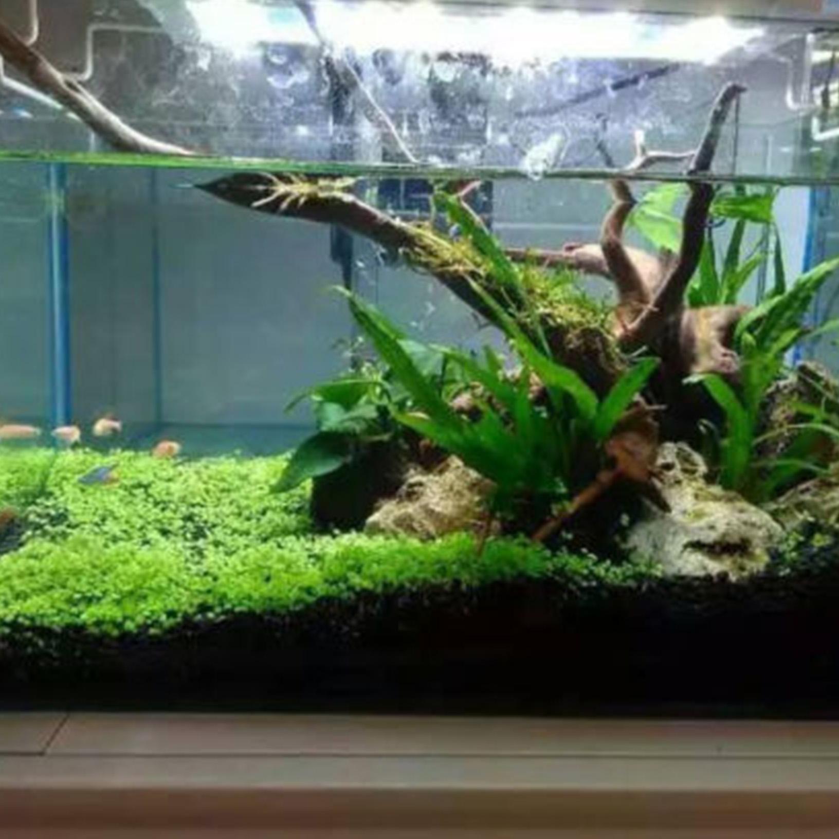 Fish tank aquarium plant decor seed cute aquatic double for Aquarium plant decoration