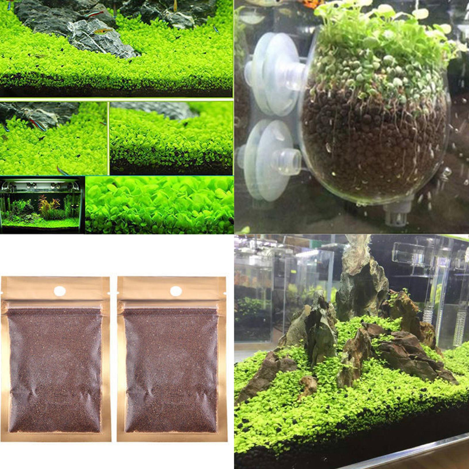 Semillas de plantas acuaticas para acuario o tanque de for Tanques para peces