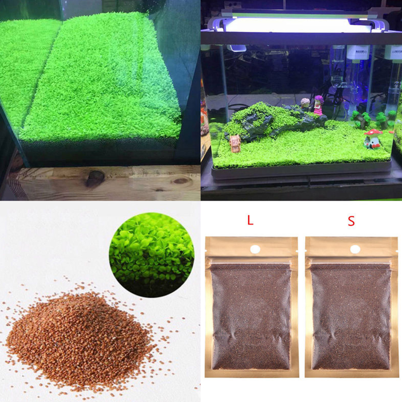 Fish tank aquarium plant seeds aquatic water grass for Plant fish tank