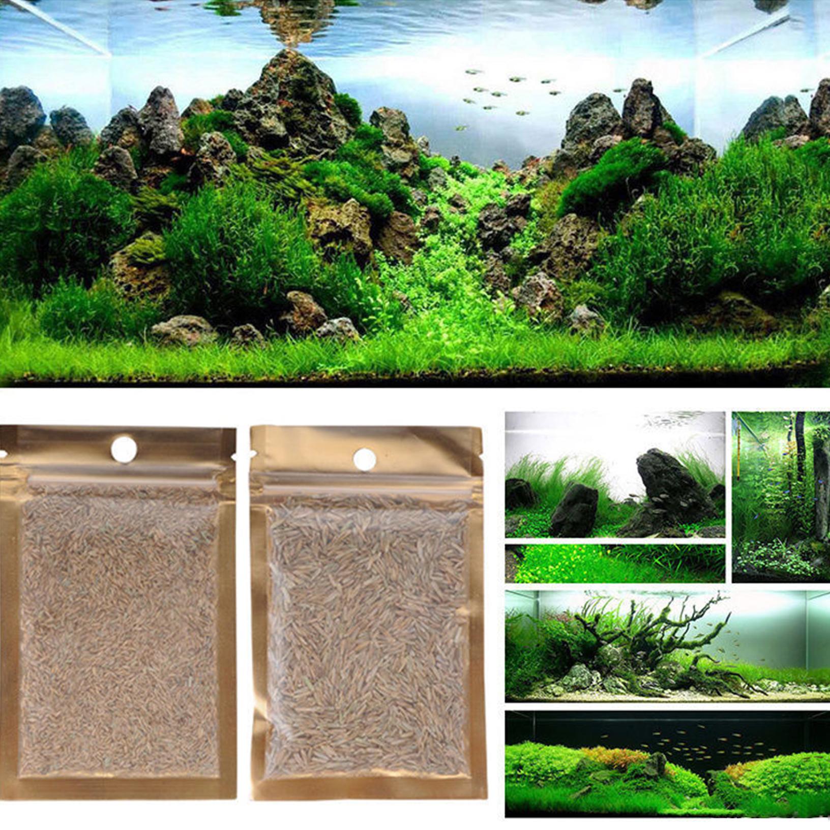 1x aquarium grassamen wasser wasserpflanze pflanzen samen aquatic aussaat seed ebay. Black Bedroom Furniture Sets. Home Design Ideas