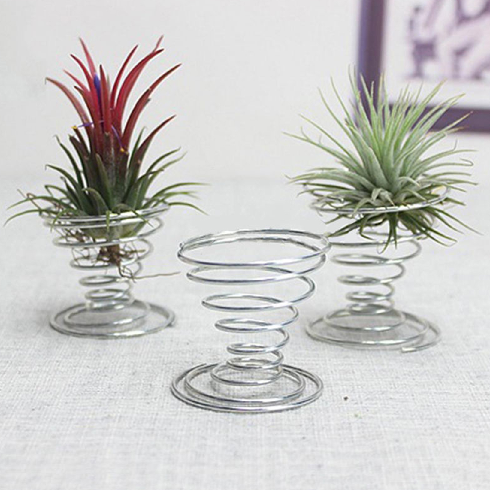 Air plant tillandsia holder container flower planter home for Air plant decoration